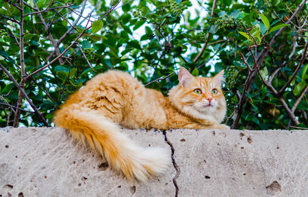 Red cat on a fence photo