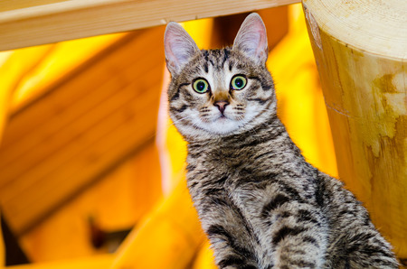 Home kitten on wooden stairs photo