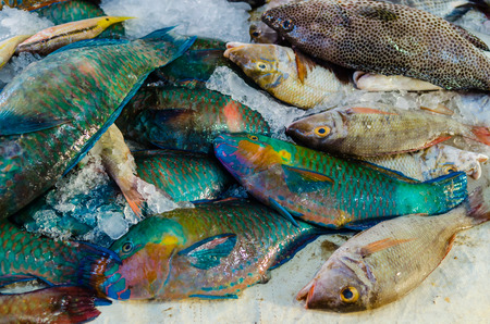 hurghada: Fresh fish at the fish market in Hurghada. Egypt