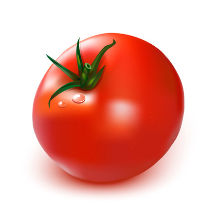 one large ripe tomato isolated on a white background , a drop of dew Ilustração
