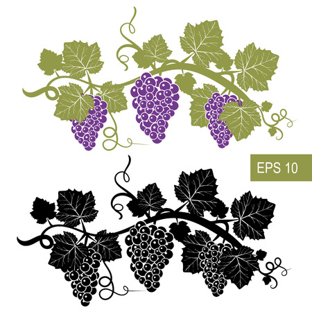 Winogrona są symbolami. Szablon. Wektor izolowane znaki. Pojedyncze białe tło.