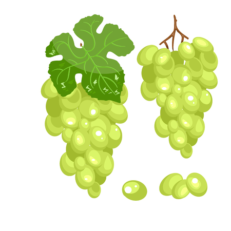 Vector bunch of green grapes on a white background. Stock vector