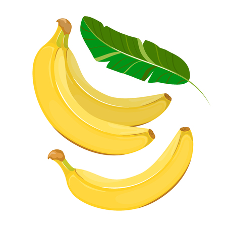 All the banana and leaves isolated on a white background. Vector illustration.
