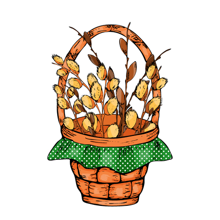 Vector illustration of a willow spring branch on a white background. Spring bouquet of willow in a wicker basket. Can be used to decorate Easter and to create brushes.