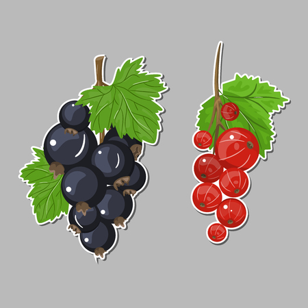 Black currant and red berries colorful illustration sticker. Çizim