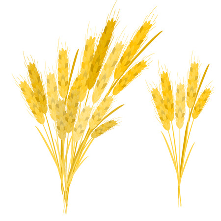 Realistic ear of wheat on a white background. Vector set.