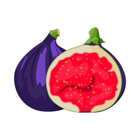 Bright vector set of colorful half, slice and whole of juicy fig. Fresh cartoon fig isolated on white background. 일러스트