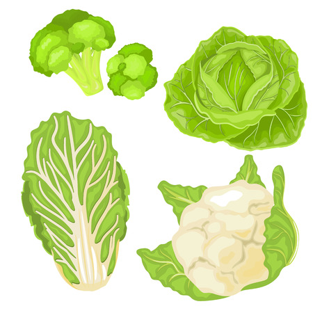 Cartoon cabbage set. Cabbage isolated on white background.