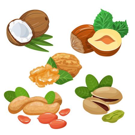 Croquis coloré de différentes sortes de noix. Vecteurs
