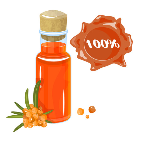 Sea buckthorn oil in glass bottle, twig and sea buckthorn isolated on white background. Vector illustration in cartoon style.
