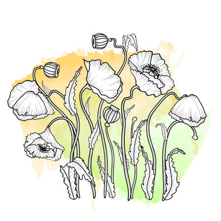 California poppy flowers drawn and sketch with line-art on white backgrounds. Vector illustration.