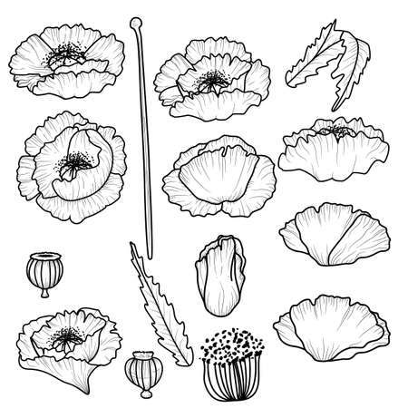 Poppy flowers. Set of outline flowers. Vector illustration. California poppy flowers drawn and sketch with line-art on white backgrounds.