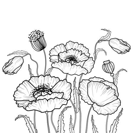 Drawing flowers. poppy flower clip art or illustration.Vector leaves background with space for text, for greeting card, t-shirt, cover design templates, banner, poster, typographic design, wallpaper, social media stories.