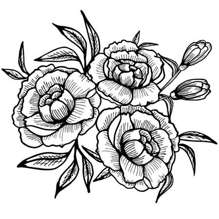 Peony flowers drawing and sketch with line art on a white background. Stock vector. 矢量图像