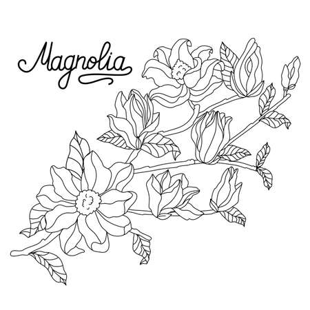 Magnolia sprig drawing and sketch with linear art on white background. Stock vector.
