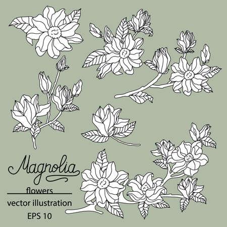 Magnolia set. Cute hand drawn flower vector illustration.