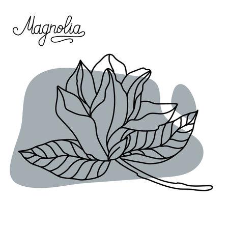 Magnolia flower. Graphic hand drawn flowers of magnolia. Vector. Magnolia flower drawing and sketch line art. 矢量图像