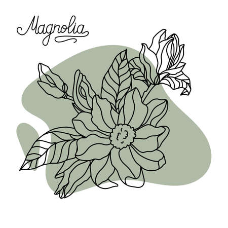 Flower drawing and sketch of magnolia. Stock vector. 矢量图像