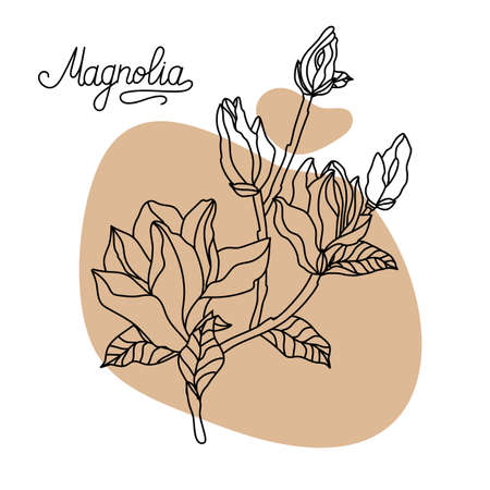 Magnolia flower, top view. Graphic hand drawn flowers of magnolia. Vector. Magnolia flower drawing and sketch line art.