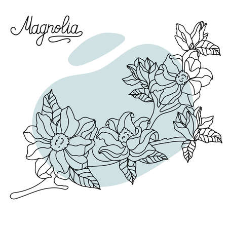 Floral botany collection sketch. Magnolia flower drawings. Black with line art on a colored background. Hand drawn botanical illustrations.