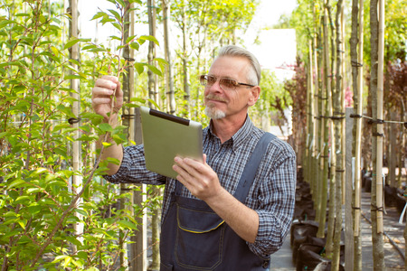 agronomist: Adult agronomist examines seedlings genetically modifying plants. The hands holding the tablet. In the glasses, a beard, wearing overalls.