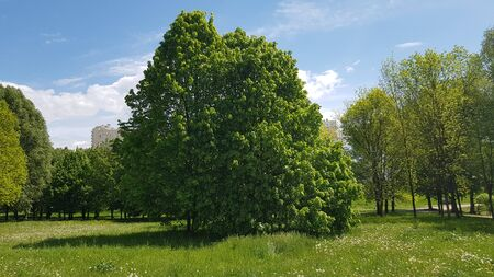 There are trees in the park. Beautiful green plants