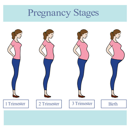 paper delivery person: Pregnancy stages illustration. Illustration
