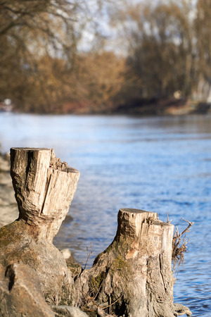 Stump in the near of a river Stock Photo
