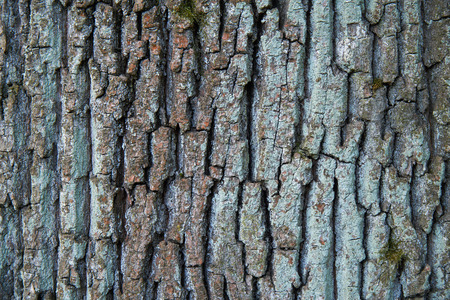 corroded: Tree bark texture close up with lychen