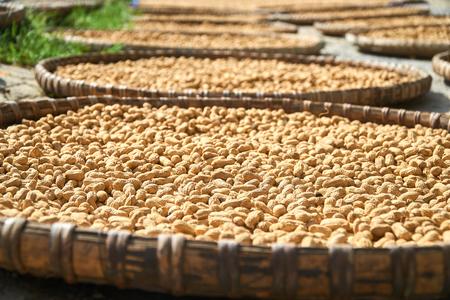 伝統的なベトナムのバスケット、ケ ・ バン国立公園, ベトナムの太陽の下で新鮮なピーナッツ dryed