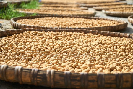 Fresh Peanuts dryed in the sun in traditional vietnamese baskets, Phong Nha Ke Bang National Park, Vietnam