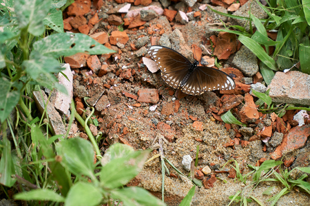 Brown butterfly sitting on red bricks in the nature