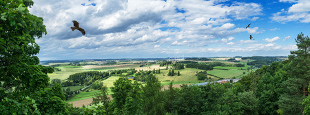 Panorama from a high altitude to a valley with a flying eagle, fields and trees. Hof, Bavaria, Germany.
