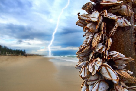 Storm with a lightning at the beach with mussels on a bamboo stick. Stock Photo