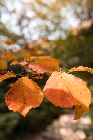Red and Orange Autumn Leaves Background. Soft focus, blurred background. Standard-Bild