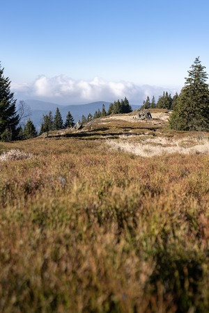 Hiking in the upper bavarian forest in the near of the Osser, germany.
