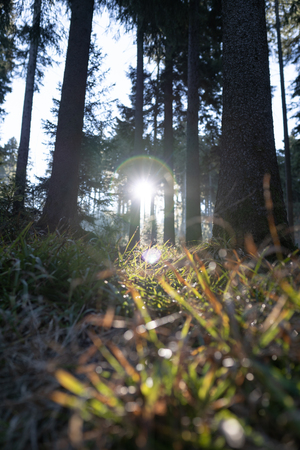 Spring Nature background. Beautiful forest at sunrise with a big lensflare and grass in the foreground. Bavarian Forest, germany. Standard-Bild