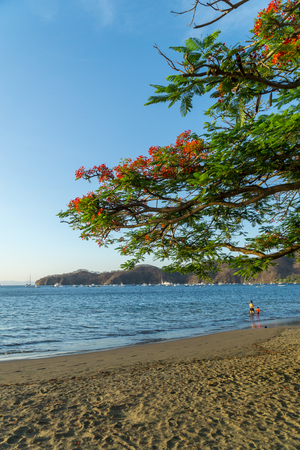 Panoramic view to the beach with red flowers blossom in the foreground.