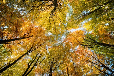 Sky in the autumn forest, Bavaria, Germany.