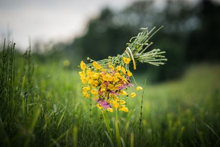 Floating beautiful bouquet of a summer meadow. Standard-Bild