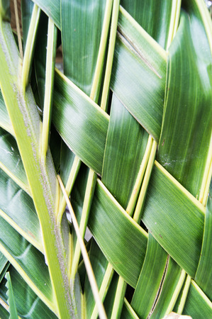 interlace: Weave of Palm Leaf in texture Stock Photo