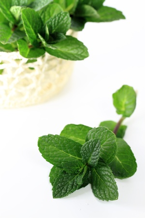 Leaf of apple mint