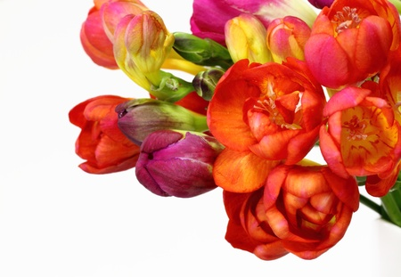 Pretty freesia bunch photo