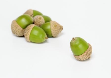 Autumn image acorn Stock Photo