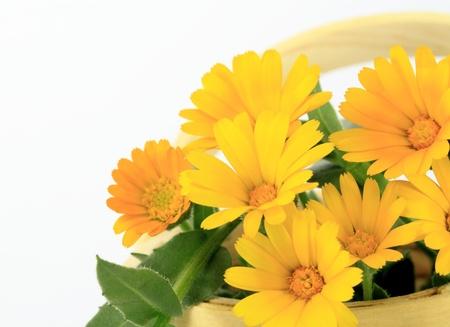 ringelblumen: Blumenkorb von h�bschen Julla