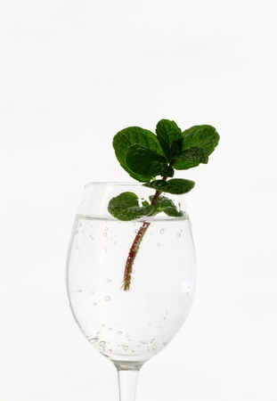 transparence: cold drink and apple mint