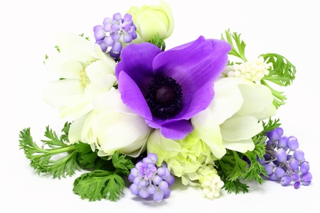 anemone flower: spring bouquet