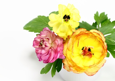 Arrangement of the ranunculus