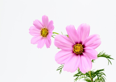 Arrangement of the cosmos Stock Photo