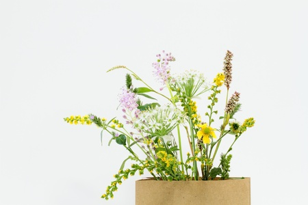 naivete: Arrangement of the flower of the field